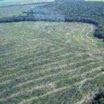 Países que han perdido más bosques y selvas tropicales.