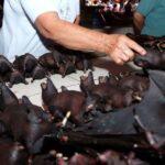 Vietnam prohíbe comercio de fauna salvaje.