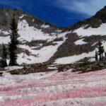 Hielo rosado en los Alpes, un escenario hermoso pero ¿qué significa?