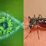 Alerta en México por sindemia: conjunción entre C-19, dengue e influenza.