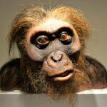 Algunos de nosotros llevamos ADN de un ancestro antiguo desconocido.