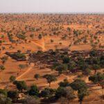 Hallaron millones de árboles en el desierto del Sahara.