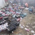 Indignante: 5,000 animales sin vida en cajas de envío en almacén de China.