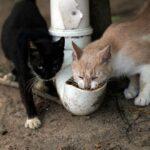 En la Isla de los Gatos están cayendo por el hambre.