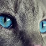 Se vende gato que «cumple deseos».