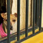 Nueva ley para que policías puedan salvar mascotas maltratadas.
