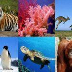 10 especies en peligro de extinción ante el cambio climático.