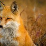 Los animales salvajes están dependiendo más de nuestra comida y las mascotas.