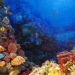 La Gran Barrera de Coral ha perdido la mitad de sus corales.