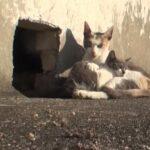 Gata no abandona a su gatito y demuestra su amor maternal (video viral).