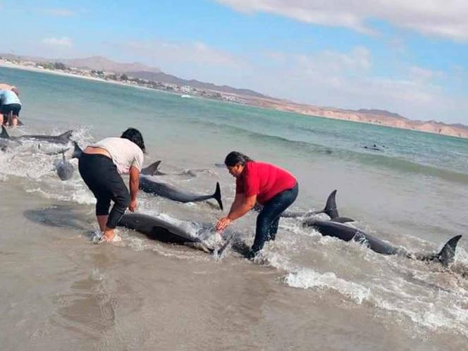 pescadores rescatan