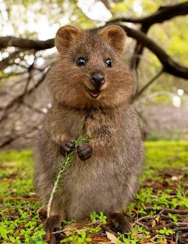 el animal más feliz