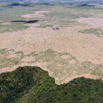 Parar la deforestación de la Amazonia, para detener el calentamiento global.