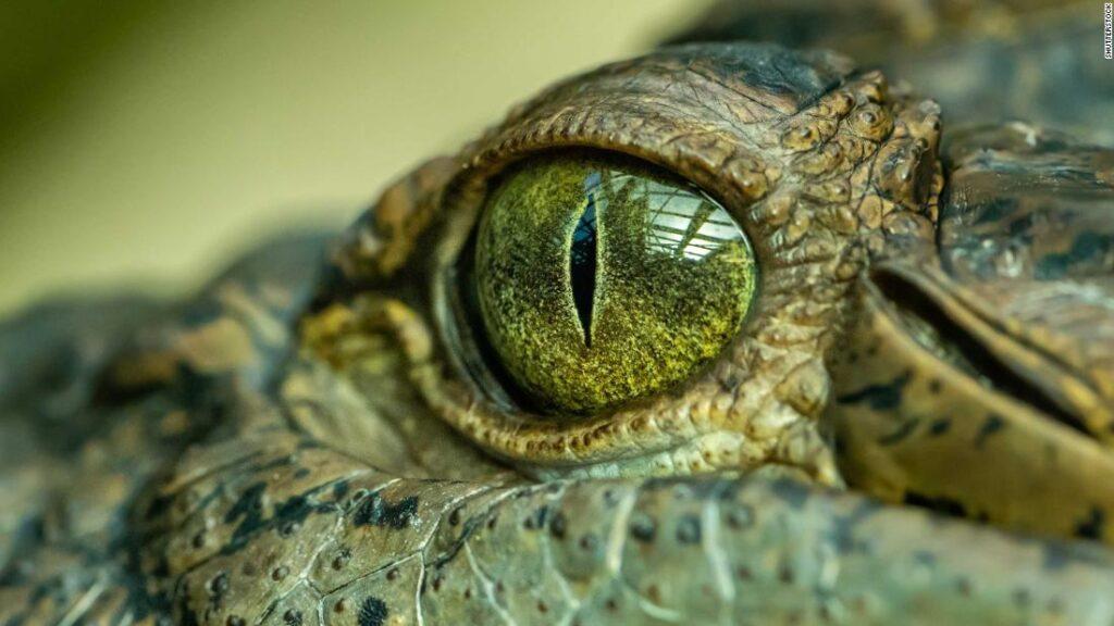 cocodrilo prehistórico