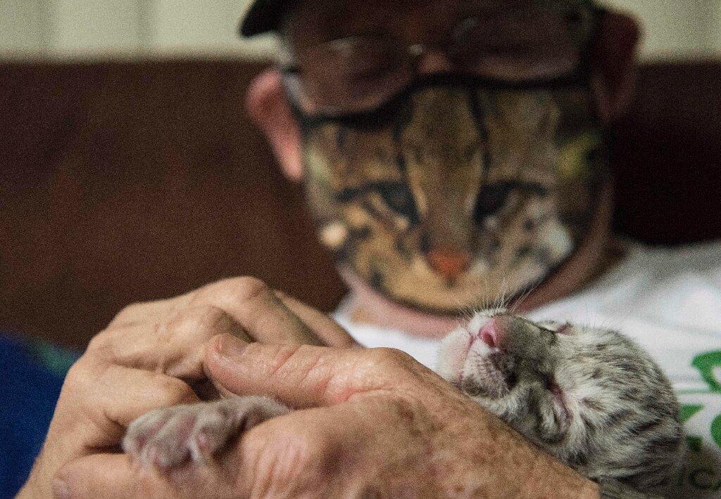 Tigre blanco nació en el Zoologico Nacional de Nicaragua.