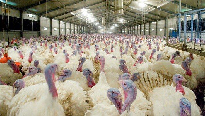 gripe aviar H5N8