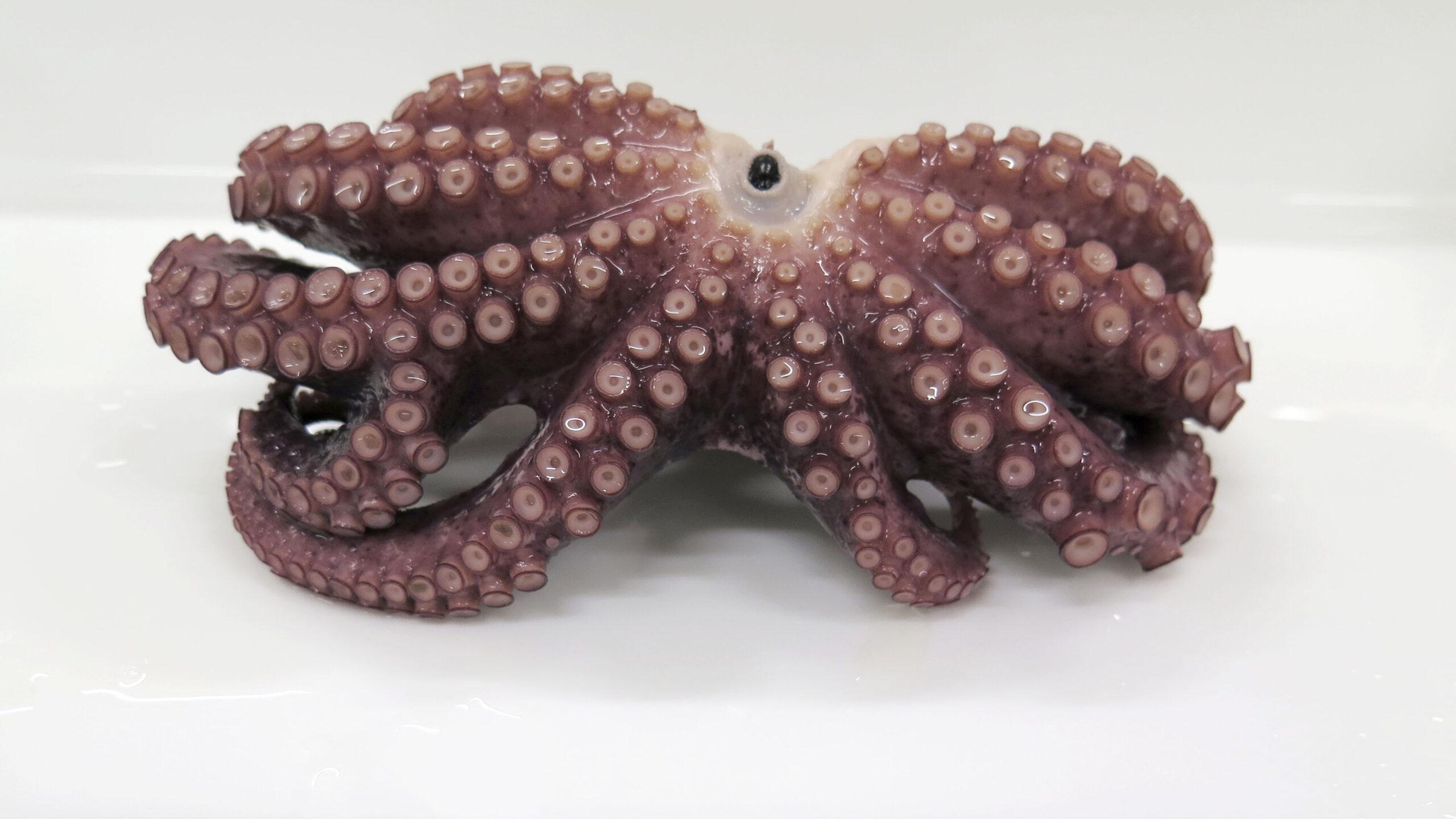 Extraños animales marinos que llegaron a las costas en 2020.