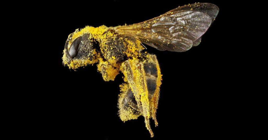 abeja ser vivo