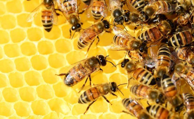 abejas ser vivo