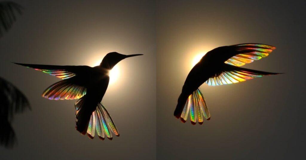 arcoíris de colibrí