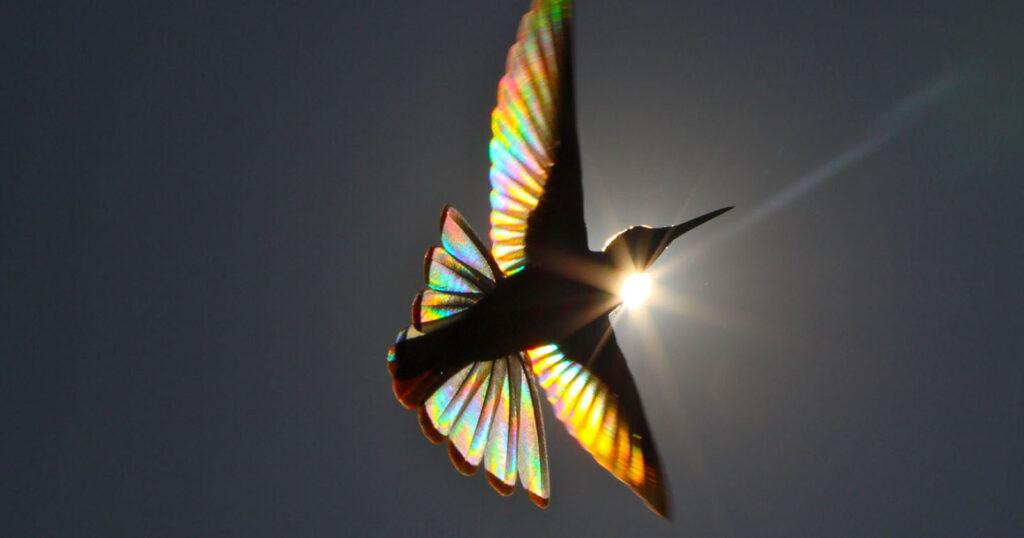 arcopiris de colibrí