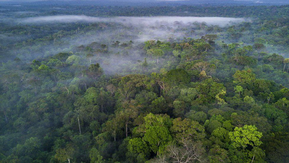 parcelas de la selva