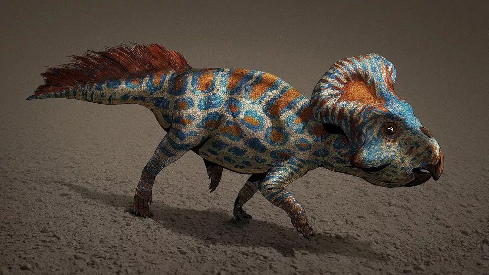 Los collares óseos o volantes en la nuca probablemente ayudaron a los dinosaurios a establecer su dominio o encontrar un compañero.