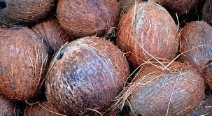 desechables a base de coco