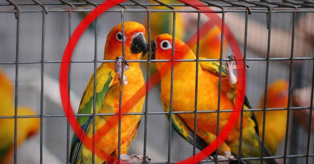 aves en libertad