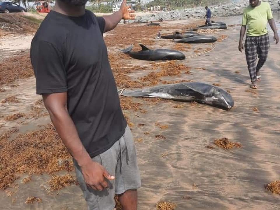 60 delfines