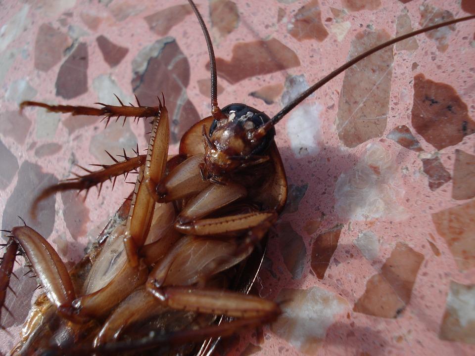 Cucarachas: miles de ellas son arrojadas a un restaurante (video).
